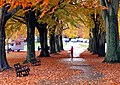 3584 Beech Trees, The Promenade (8176293658).jpg