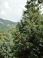 4251 Bachkovski manastir, Bulgaria - panoramio (1).jpg