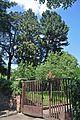 46-101-5029 Lviv Trusha 19 Pinus Peuce RB.jpg