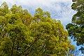 7th & Land Park Sacramento Trees (26145037865).jpg