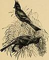 A-birding on a bronco (1896) (14563647410).jpg