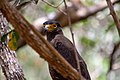 A Bird in Wilpattu National Park 13.jpg