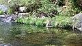 A Pobra do Caramiñal río Pedras 42.jpg