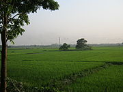 A Village of Bangladesh by Rezowan.jpg