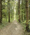 A brighter bridleway - geograph.org.uk - 1515590.jpg