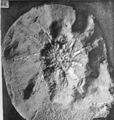 A monograph of the terrestrial Palaeozoic Arachnida of North America photos 41-46 44.png
