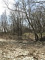 A view of a trail trace at Rock Creek Crossing in Council Grove, KS - 3 (eadb14b6cf4041feb5f004a547563cb4).JPG