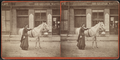 A woman and a horse at Putnam, from Robert N. Dennis collection of stereoscopic views.png