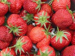 ostara erdbeere