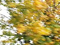 Abstract- Autumn II (37773468781).jpg