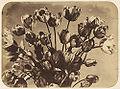 Adolphe Braun Tulpen.jpg