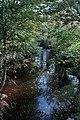 Afon Troddi-River Trothy - geograph.org.uk - 606762.jpg
