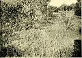 African invertebrates - a journal of biodiversity research (1919-1924) (17916939116).jpg