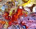 Agate slab macro 3D (cropped).jpg