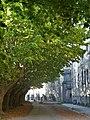 Allée de platanes de la Cité Blanche, coté batiments principaux.jpg