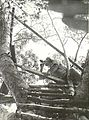 Allied artillery observation post at Buna AWM photo 014019.jpg
