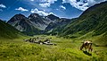 Alps of Switzerland Cow above Sertig Dörfli (23024185119).jpg