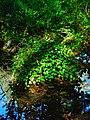 Alto Adige Suedtirol Biotopo Rio dei Gamberi Krebsbach photo by Giovanni Ussi - 03.jpg