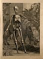 An écorché figure, front view, with left arm extended, Wellcome V0008356.jpg