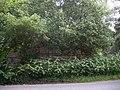 An overgrown roadside ruin - geograph.org.uk - 1370132.jpg