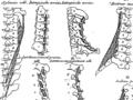Anatomia Britannica- a system of anatomy Fleuron N001319-25.png