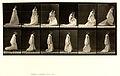 Animal locomotion. Plate 207 (Boston Public Library).jpg