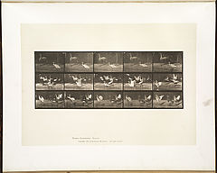 Animal locomotion. Plate 778 (Boston Public Library).jpg