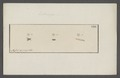 Anthomyia - Print - Iconographia Zoologica - Special Collections University of Amsterdam - UBAINV0274 039 07 0011.tif