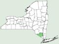 Antirrhinum majus NY-dist-map.png