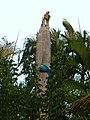 Ara ararauna en tronco de Roystonea sp..jpg