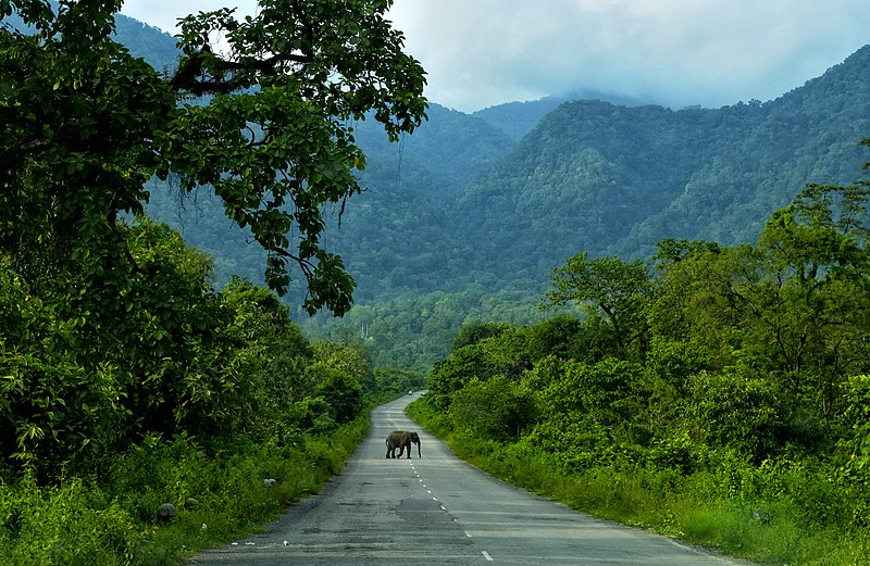 File:Asian Elephant Elephas maximus DSC0702-01.jpg