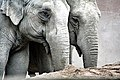 Asian Elephants' Image.jpg