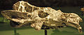 August 1, 2012 - Skull of Exaeretodon on Display at the Royal Ontario Museum (MC2 4483).jpg