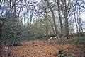 Autumn, Hoad Wood - geograph.org.uk - 1575128.jpg