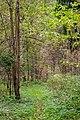 Autumn In Vozdvizensky Forrest.jpg
