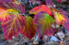 Autumn Leaves 1b NBG.png