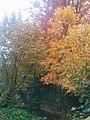 Autumn at Blau Ulm (24107239765).jpg