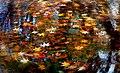 Autumn twirled. (19599037915).jpg