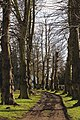 Avenue at Felsted Essex England 01.jpg