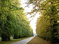Avenue in Autumn - geograph.org.uk - 1008054.jpg