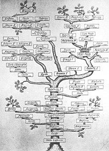 L'albero genealogico relativo al ramo principale del casato baglionesco