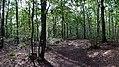 Balade en Forêt de Verrières le 20 août 2017 - 007.jpg