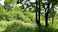 Bandipur Tiger Reserve @ Gopal Swami Betta - panoramio.jpg