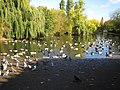 Barking Park, The Lake - geograph.org.uk - 601621.jpg
