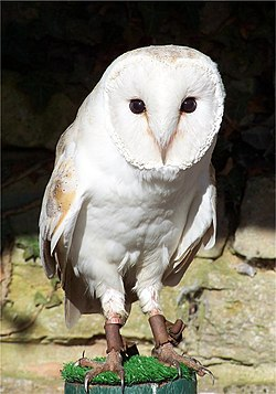 フクロウの画像 p1_8