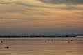 Bassin oiseau-064.jpg