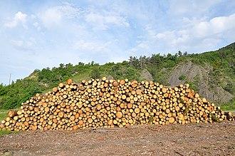 Bayons - Logging in Bayons.