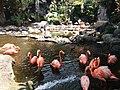 Beautiful Flamingo.jpg