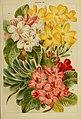 Beautiful flowering trees and shrubs for British and Irish gardens (1903) (19736146874).jpg