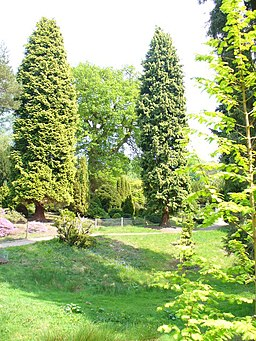 Bedgebury Pinetum - geograph.org.uk - 796940